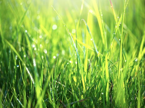 Turf-Tech-Landscaping-Resources-Grass-Facts