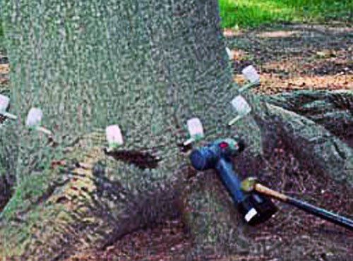 Turf-Tech-Landscaping-Resources-Tree-Killer
