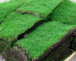 Turf Tech Landscape Supplies